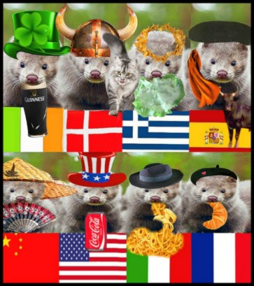 Minks from around the world