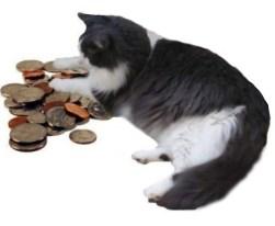 Money Kitty M