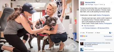 The Montreal SPCA brought in actress Pamela Anderson to help fight the Montreal pit bull ban.