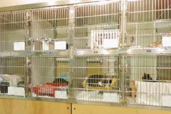 Oregon Humane Society cat adoption cages, photographed from the staff work area out toward the visitors' corridor. (OHS photo)