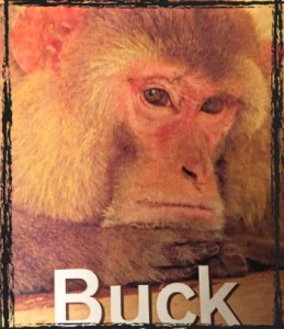 Oklahoma Primate Sanctuary Buck the Macaque