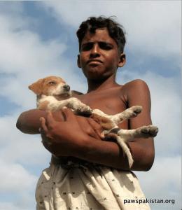 (Pakistan Animal Welfare Society photo)