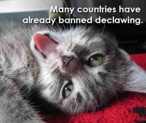 PETA anti-declaw meme