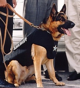 Pasco Sheriff's Office canine officer.