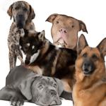 Dog attack deaths & maimings, U.S. & Canada, 1982-2018 log