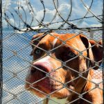 Congress rejects immediate repeal of dog breed bans in military housing