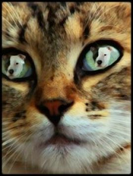 Cat sees pit bull