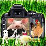 U.S. & Canadian courts favor farmed animals five times in a week
