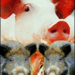 Walls, boar purges, & no-man's-land fail to stop African swine fever