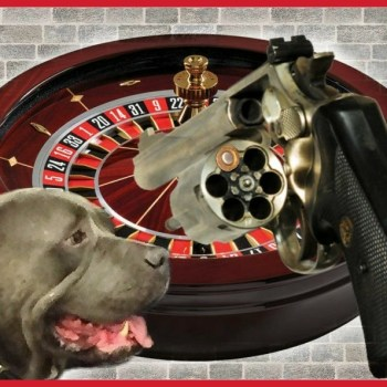 """Pit bull roulette"" killed 38,000 other animals in 2017"