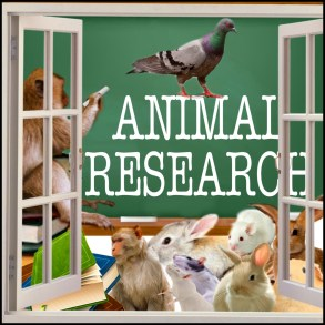 Animal research with chalkboard