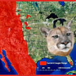 Eastern puma declared extinct––but did it ever really exist?
