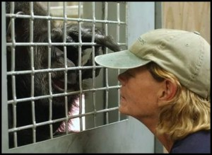 Carole Noon, Save the Chimps