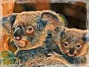 Koala mother & baby