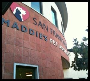 Maddie's Adoption Center