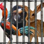 Enforcing anti-cruelty laws proves harder than passing them