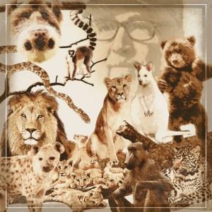 Tim Stark animals