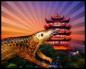 Pangolin in Wuhan by Beth Clifton