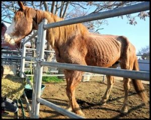 Neglected horse Fresno County