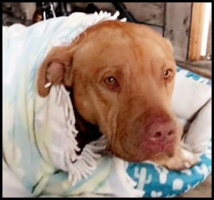 Dog killed Cameron Hatfield