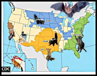 CDC wildlife rabies map
