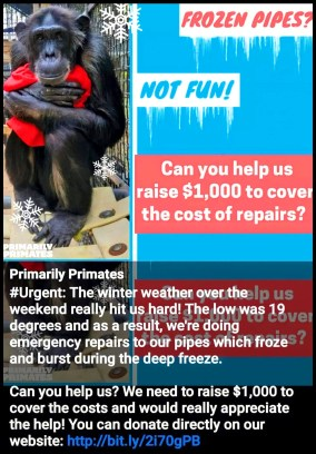 FoA frozen pipes