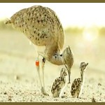 Did the bastards kill any bustards?  Oil sheik hunters evicted from Pakistan