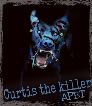Curtis the pit bull 2