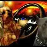 "Pit bulls & ""proximate cause"" deaths"