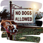 Oregon cities move to bar dogs from public areas