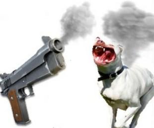 Pit bull & gun
