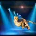 Fatal cheetah attack spotlights big cat breeding industry