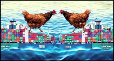 chicken in Suez Canal