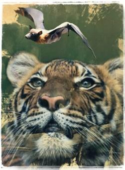 Tiger & bat