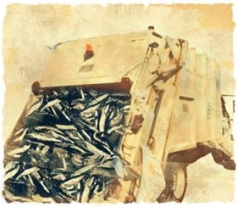 Dump truck dumping fish