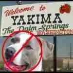 Yakima reaffirms pit bull ban––& suburb reinstates one
