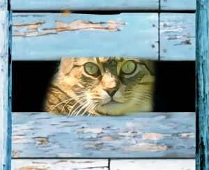 Cat in a rustic fence