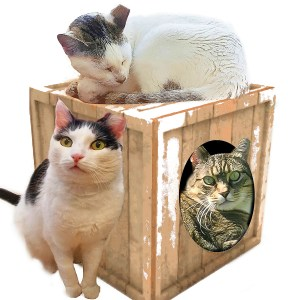 Three TNR cats in a wood built cat house