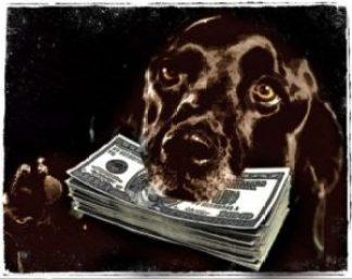 Money dog