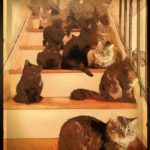 300 cats found in apartment near the scene of multiple murders