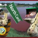 Pooped on for profit:  pigs,  chickens, & people in North Carolina