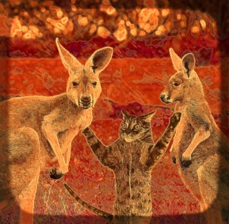 Kangaroos & cat