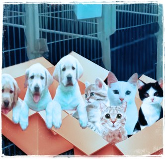 Puppies & kittens in boxes