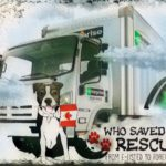 Fatal truck crash spotlights lack of attention to safety in dog transport
