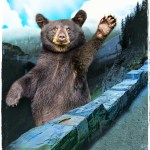 Black bear at roadside