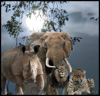 African animals in the moonlight with Lion, leopard, elephant and rhino