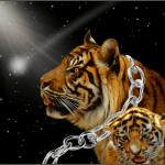 """Tiger Kings"" lose stripes in Nevada, Oklahoma, & Texas"