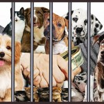 Will regime changes underway in New Jersey bring a new day for animals?