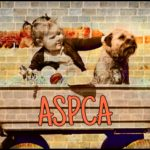 Why is the ASPCA stonewalling about the deaths of 20 dogs in transport?