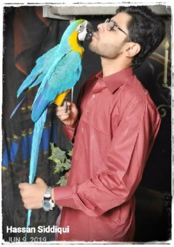 Hassan Siddiqui and parrot